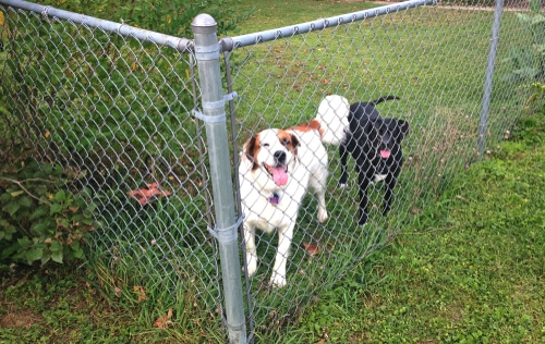 Fences for Dogs Milwaukee Fence Finders