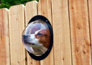Pet Fence Window Waukesha Milwaukee Madison